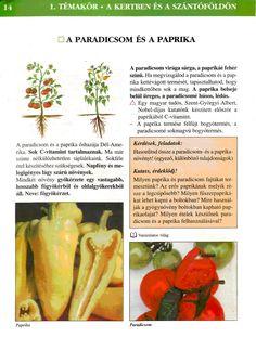4. feladat Carrots, Vegetables, Food, Carrot, Hoods, Vegetable Recipes, Meals, Veggies
