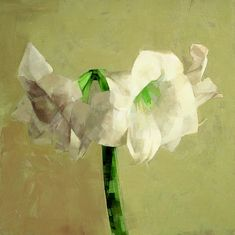 "Catherine Kehoe  White amaryllis  2004  oil on panel  8"" x 8"""