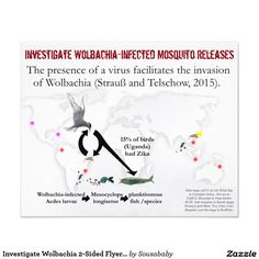Seems the pro-Wolbachia people would like to pretend that Wolbachia-infected Aedes aegypti never die. Or they would like the public to believe that Culex will not bite birds that have Zika.   Remember, 15 percent of birds had Zika (Uganda) in 1970. This percentage would only increase (as it did with West Nile virus). The public deserves all the facts: http://www.infobarrel.com/More_Proof_Wolbachia-Infected_Mosquito_Releases_Might_Be_Causing_the_Most_Devastating_Zika_Infections