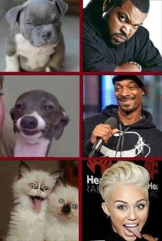 I really like this picture and I laugh the first time I saw it because it is true how they look a like. I laugh the most at the seconded picture because I find the face of the dog is really hilarious.