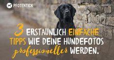 (Artikel) 3 erstaunlich einfache Tipps wie Deine Hundefotos professioneller werden.