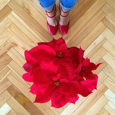 Felicidad máxima de jueves gracias a clientas que son un amor y me traen flores. (Y encina poinsetia!). Gracias @martapascualcor eres !#lovemyjob #christmasishere #christmas #flowers #happiness by cristina_pina