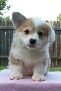 Cute Dogs And Puppies In Hd our Cute Animals Going Extinct minus Cute Cartoon Animals In Love; Cute Animals Names but Cutest Animals Ever List Fluffy Puppies, Cute Puppies, Cute Dogs, Dogs And Puppies, Cute Animals Puppies, Cute Funny Animals, Cute Baby Animals, Animals And Pets, Cutest Animals