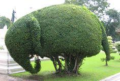 Would love to do this to my big hedge.  http://norulesnoshame.files.wordpress.com/2009/10/elephanttopiary22.jpg