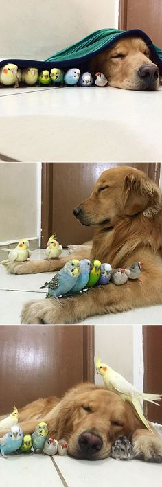a dog, 8 birds, and a hamster are the most adorable friends