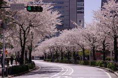 Yokohama Springtime