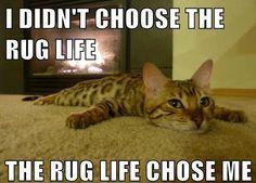 I didn't choose the rug life. The Rug Life chose me.