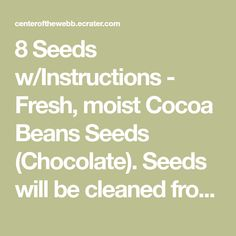 8 Seeds w/Instructions - Fresh, moist Cocoa Beans Seeds (Chocolate). Seeds will be cleaned from the pulp and arrive packaged in a damp soil-less mix,