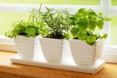 Házi termesztésű fűszernövények.