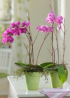 Így tartsd életben az orchideát! Orchid Plants, Orchids, Orchid Care, Houseplants, Garden Plants, Flower Power, This Or That Questions, Stems, Gardening