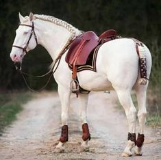 The most important role of equestrian clothing is for security Although horses can be trained they can be unforeseeable when provoked. Riders are susceptible while riding and handling horses, espec… Equestrian Boots, Equestrian Outfits, Pretty Horses, Beautiful Horses, Horseback Riding Lessons, White Horses, Horse Pictures, Horse Photography, Nature Photography