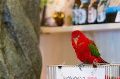 Adorable bird from Tokyo's Tori no Iru Cafe (Bird and Owl Cafe)