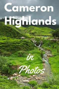 A photo essay of my Cameron Highlands tour highlights - Tracie Travels