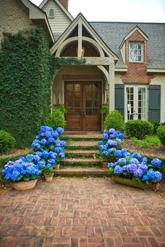 Mass of potted blue hydrangeas creates a dramatic entrance to this home. A mass of any one kind of flower could do the same.
