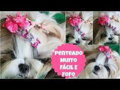 Penteado Muito Fácil Com Acessórios Fofos Para Sua Cachorrinha | #LóiPor31Dias 24 | Lói Cúrcio - YouTube