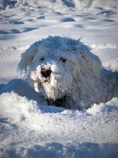 Now that is a snow dog 4 sure
