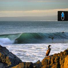 """#TIPdeldía  """"Desde dónde un@ lo mire...nuestro querido deporte es filete! """" #surf #chile #surforo"""