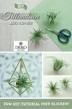DIY: Air Plants (Tillandsia) are great for many pretty decorations. - DIY: Air Plants (Tillandsia) are great for many pretty decorations. DIY: Air Plants (Tillandsia) are great for many pretty decorations. Paper Flower Decor, Flower Decorations, Paper Flowers, Diy Flowers, Flower Crafts, Paper Succulents, Paper Plants, Fleurs Diy, Fern Plant