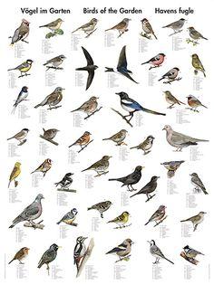 Bilderesultat for kart over norske fugler