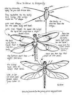 How to Draw Worksheets for The Young Artist: Printable How To Draw A Dragonfly Worksheet There are project notes at the blog.