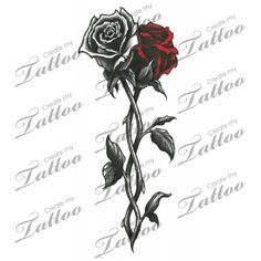 Intertwined Roses Sergio is the white rose and I'm the red ❤️
