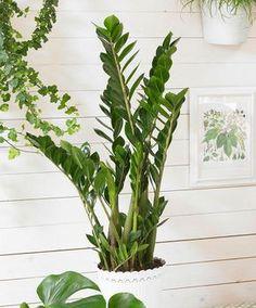 Vous avez le pouce noir? Laissez de côté les plantes qui sont très high maintenance et privilégiez plutôt ces plantes d'intérieur faciles d'entretien!