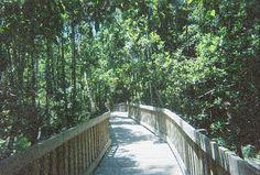 Tibet-Butler Preserve, Fallen Log Trail, Florida