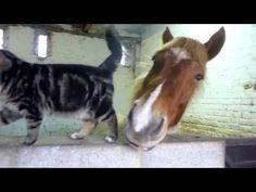 Câlins entre un chat et un cheval