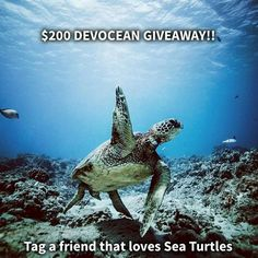 Comparateur de voyages http://www.hotels-live.com :  HOW TO ENTER  Follow @DevotedtotheOcean  Tag 3 friends in the same picture thats on THEIR PAGE  Choose friends that love the ocean and want to make a difference  Remember a portion of profits from EVERY PURCHASE is donated to Sea Turtle Research and Conservation programs   TWO lucky winners will be chosen from their comments and will be announced tonight at 10pm in the next @DevotedtotheOcean post! by awesomedreamplaces…
