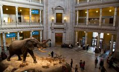 The National Museum of Natural History in Washington, D.C., United States.