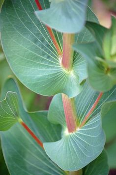 Round leaves.