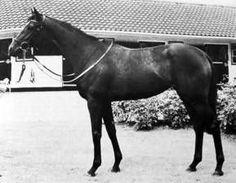 Monroe(1977)(F)Sir Ivor- Best In Show By Traffic Judge. 5x5 To Selene & Man O' War. 8 Starts 3 Wins 4 Seconds. $34,422. Won Ballyogan S(Ire-3), 2nd Phoenix S(Ire-1), Mulcahy S(Ire-3), Castleknock Sprint S(Ire).: