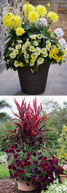 24 stunning container garden designs with PLANT LIST for each! Lots of designer tips on selecting the best mix of flower plants and creating a beautiful colorful garden which blooms all season with…MoreMore #GardeningDesign
