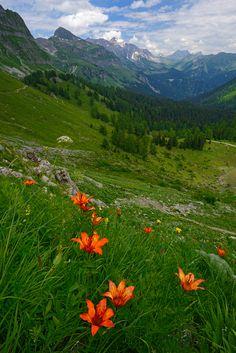 Wilde Feuerlilien am Glegghorn Graubünden