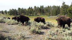 Lamar Valley, Yellowstone