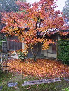 Fallen leaves in chaniwa