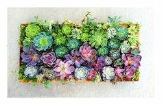 32 Reasons Succulents Are The Best Plants Ever :)