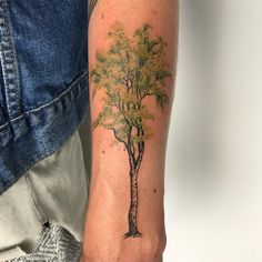 Birch Tree by Aleksander Lew