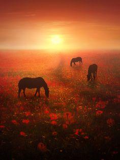 Field of Dreams by Jenny Woodward on 500px