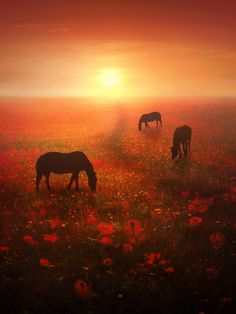Field of Dreams by Jenny Woodward on 500px