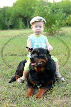 http://www.rottweiler-dog-breed-store.com/ #kid #rottweiler #photography