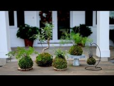 Moss Balls, also known as Kokedama or string gardens are a unique way to garden vertically. Kokedama is a style of Japanese bonsai made by taking your plant . Moss Garden, Garden Pots, Bonsai Garden, Indoor Garden, Indoor Plants, Art Floral Japonais, Bonsai Soil, String Garden, Cheap Plants