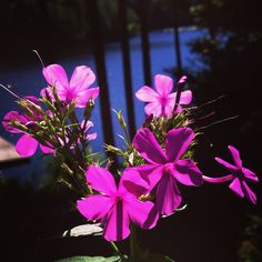 Perfect Pink Flowers