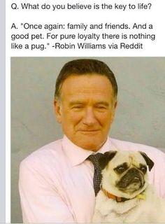 RIP Robin Williams, and be strong Leonard (Robin's Pug)… Robin Williams, Pug Love, I Love Dogs, Pug Pictures, Pug Pics, Pug Photos, Pugs And Kisses, Cute Pugs, Funny Pugs