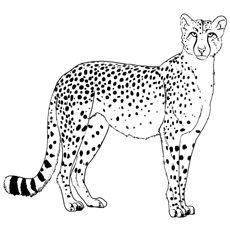 25 Best Cheetah Coloring Pages For Your Little Ones Cheetah Pictures Cheetah Drawing Easy Animal Drawings