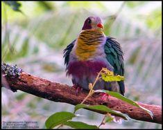 Wild Birds | | :: Birding Adventure Philippines | Guided birdwatching ...