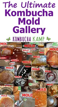 Click through to find images of mold on Kombucha to determine if your brew is safe to consume Kombucha Flavors, Kombucha Scoby, How To Brew Kombucha, Kombucha Recipe, Kombucha Brewing, Kombucha Benefits, Fermentation Recipes, Homebrew Recipes, Pumpkin Spice Coffee