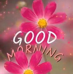 Good Morning Gif Funny, Good Morning Monday Images, Good Morning Video Songs, Sunday Morning Quotes, Latest Good Morning Images, Good Morning Tuesday, Good Morning Images Flowers, Good Night Gif, Good Morning Happy