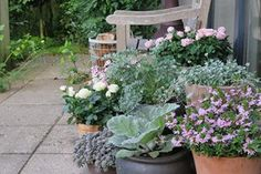 10 perennial plants that decorate your garden and are impossible to kill From pot roses to pot rosesIKEA HOME IDEAS.Summer-summer with colorful balconies - Nihan Berberoğlu - Green Garden, Summer Garden, Shade Garden, Garden Plants, Garden Inspiration, Garden Ideas, Perennials, Beautiful Flowers, Planters