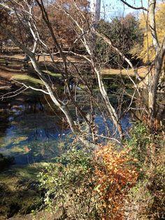 Chickamauga Georgia- stood on the bank with Craig.